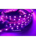 SMD 5050 Color Changing RGB Fexible LED Strips, 60LEDs/M, 5M/Roll, 12 VDC