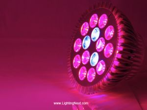 15x1W PAR38 E27 Red Blue (13:2) LED Grow Light Bulb